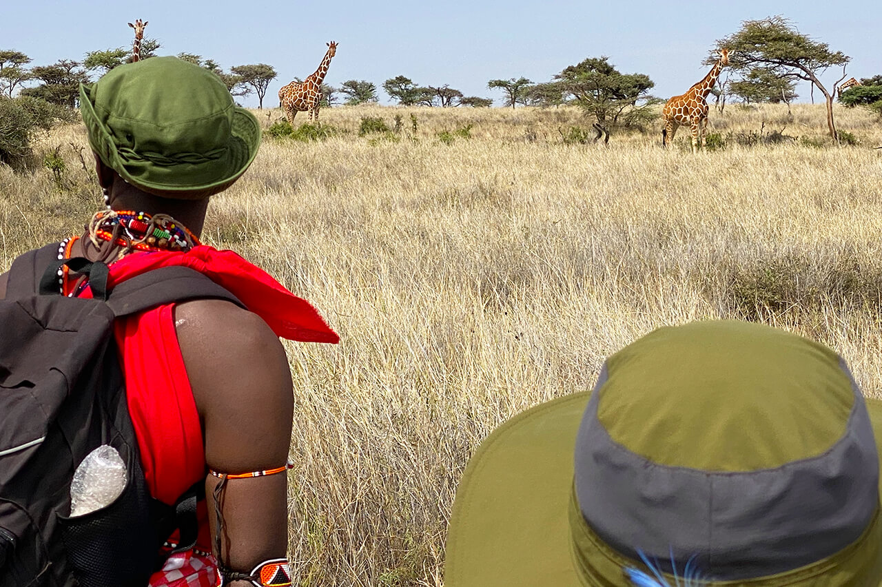 Giraffe sighting during Walking Wild nomadic safari - Photo by David Tett