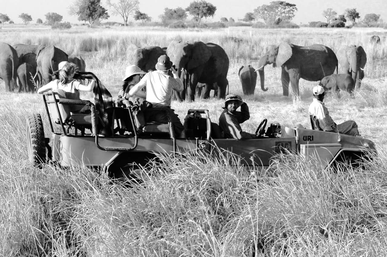 Bushtracks Expeditions Safari Activity in Africa