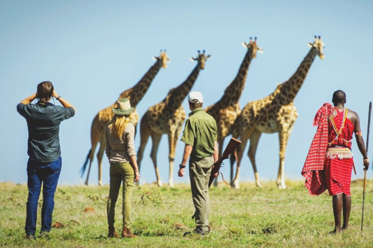 Giraffes and guided walking tour group in the Mara - photo by Dana Allen