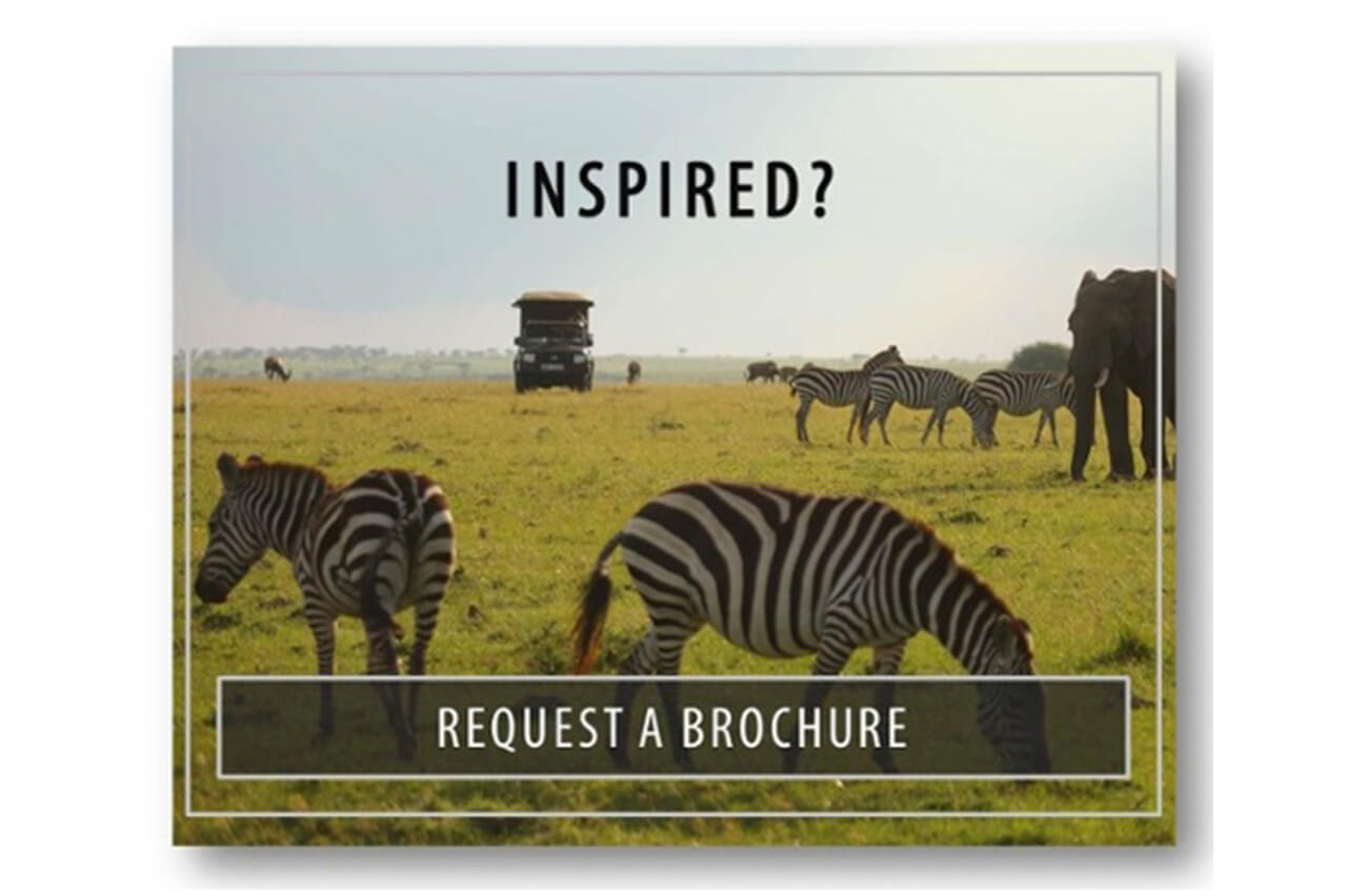 Inspired - Request a brochure - see zebras during a safari in Africa