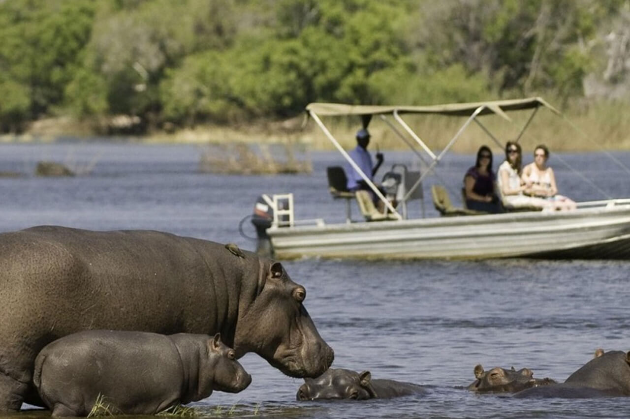 Travelers Pass by Hippos in Botswana During Their Boat Safari