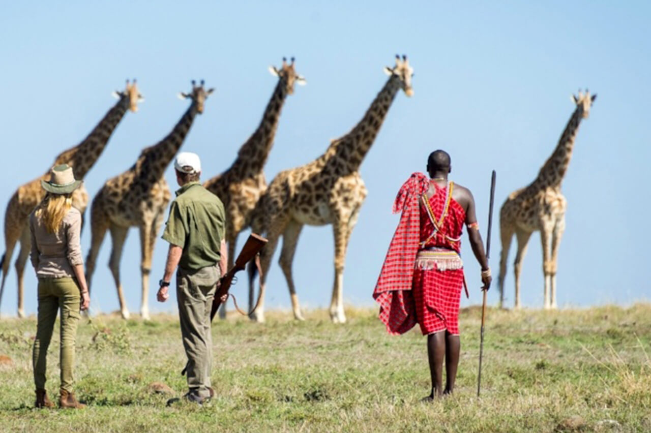 Travelers and guides come close to giraffes on a walking safari in the Mara - photo by Dana Allen
