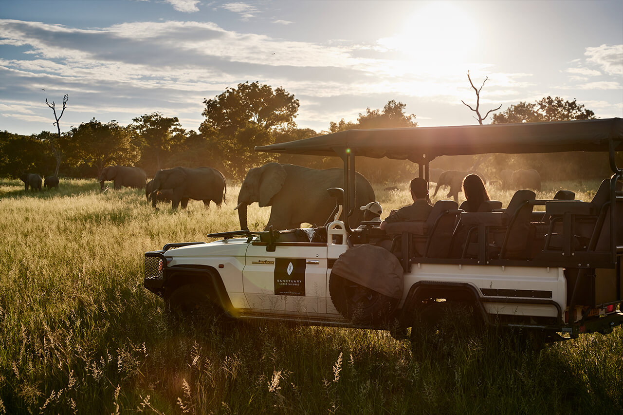Travelers see elephants during a Chobe Chilwero game drive in Chobe National Park