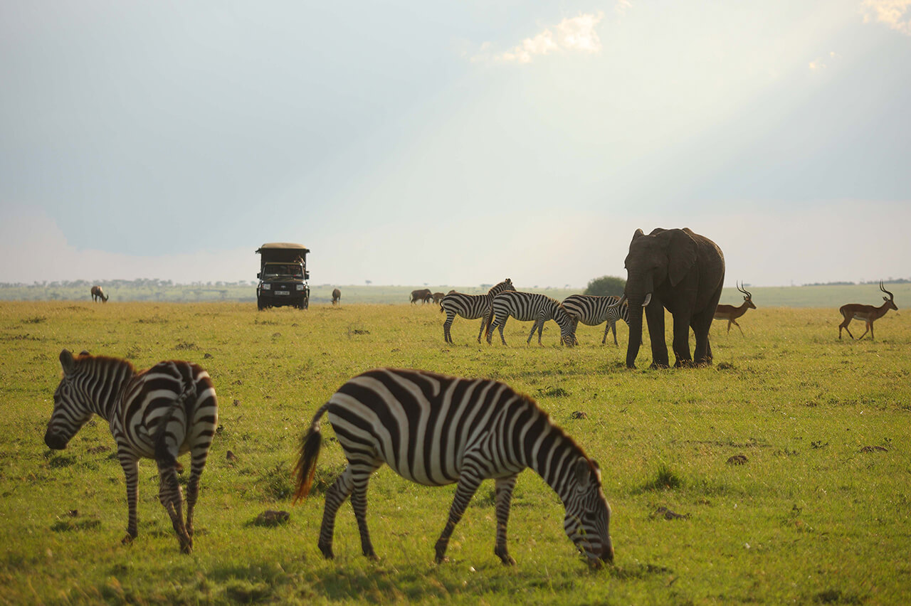 Travelers see wildlife in Masai Mara National Reserve during a game drive in Kenya - photo by Pepper Camp