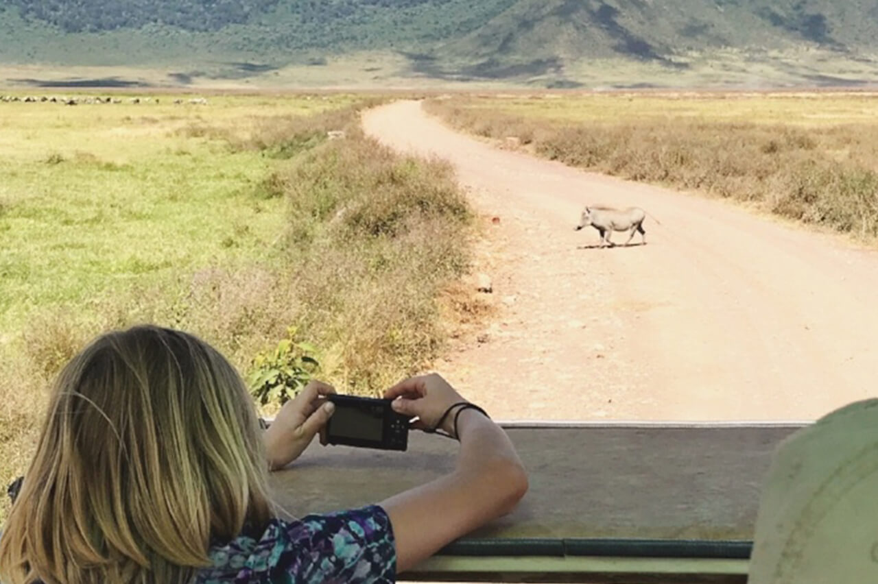 Warthog Crossing in Front of Vehicle with Andrews